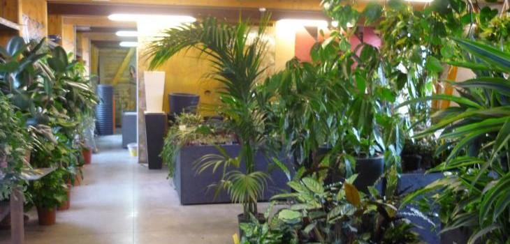Gallery serra lorenzini milano vendita piante e fiori for Vendita piante e fiori