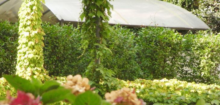 Terrazzi giardini serra lorenzini milano vendita piante for Vendita piante e fiori